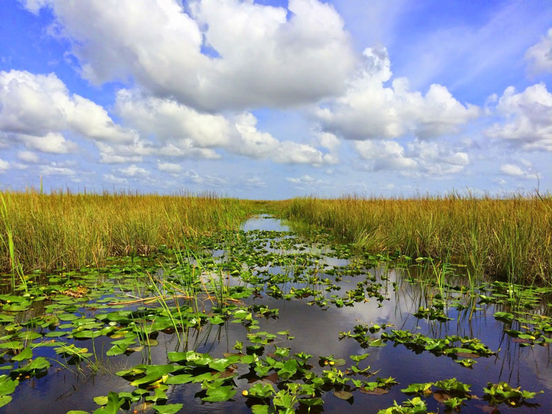 image of x at Miami Everglades