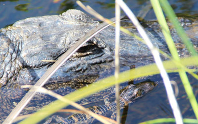 Preserving the Everglades — More than Just a Tourist Spot