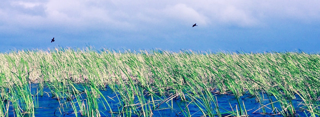 Common Plants to Spot on Your Everglades Tour