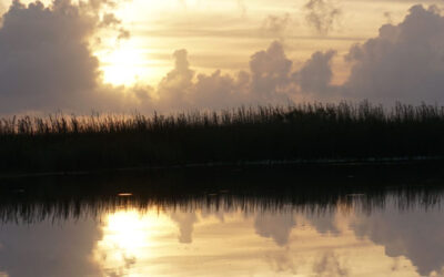 4 Great Reasons to Visit the Everglades This Summer